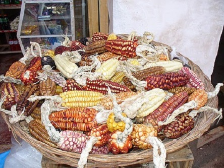 Saramamalla (Mother Corn)- Climate Change and the Andean Corn Culture