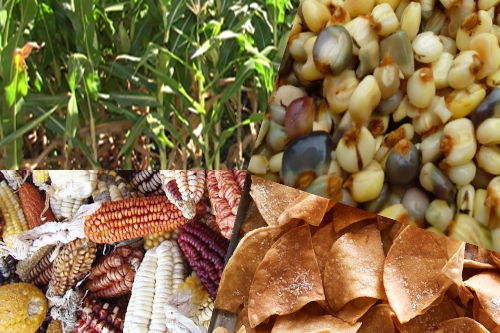 Maize meets Tortilla Chips:  History and Culture of Corn