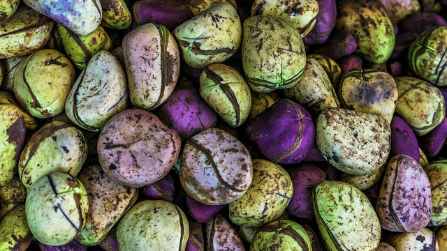 The kola nut: West African commodity in the Atlantic world