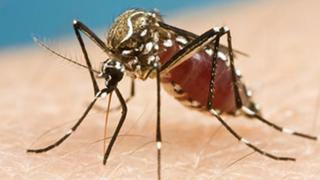 Zika Virus: Mother to Child Transmission